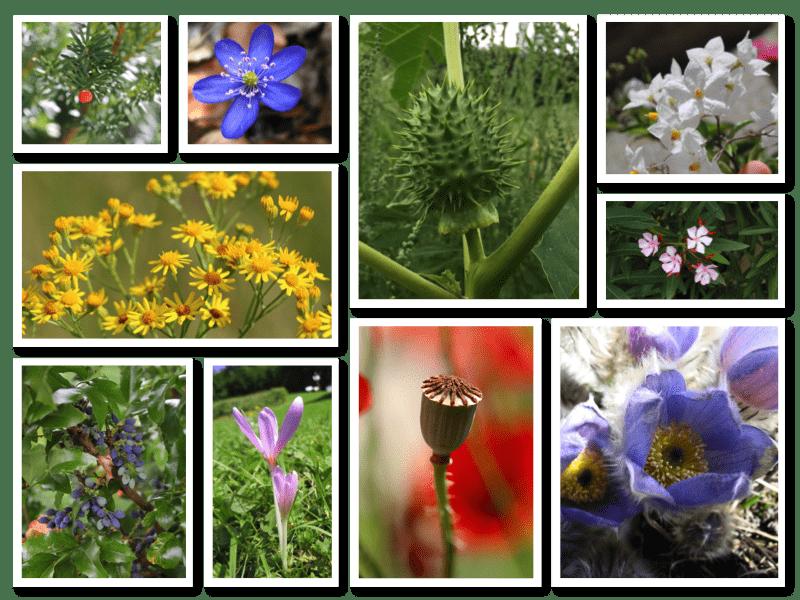 Giftpflanzen Collage
