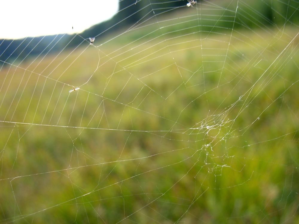 Spinnennetz Kupferbachtal