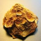 Tugurium scrutarium 2