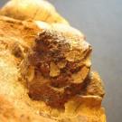 Tugurium scrutarium 4