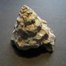 Xenophora conchyliophora 1