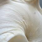 Stellaria testigera digitata 2 Skulptur Basis