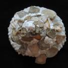 Xenophora tenuis 1 - apikal