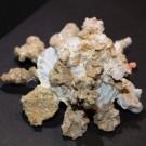 Xenophora mekranensis konoi 1 - schräg