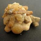 Xenophora senegalensis 1 - schräg (a)