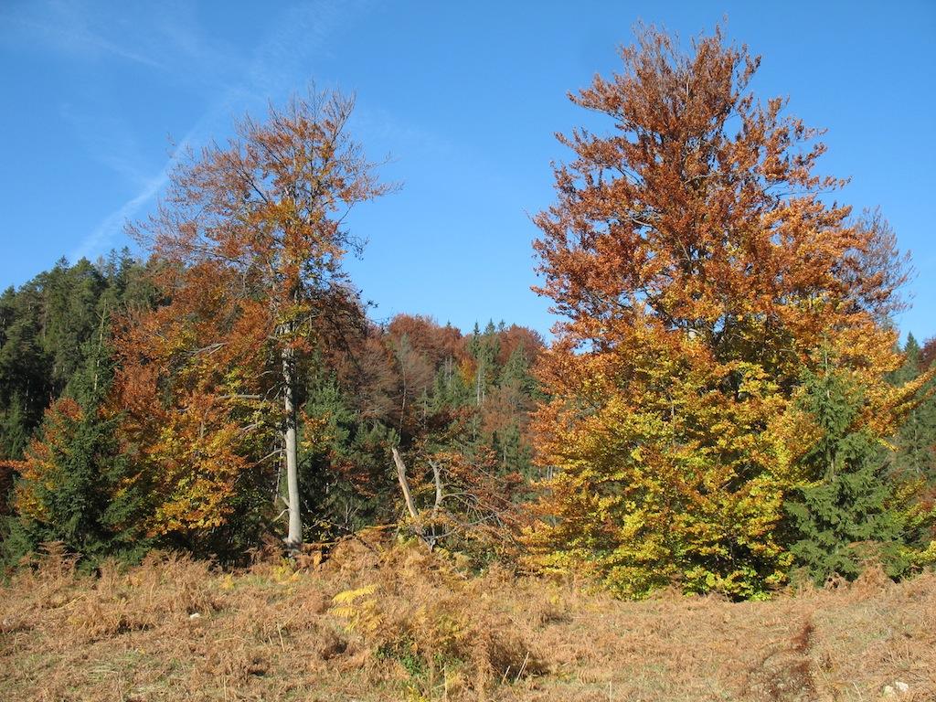 Bäume mit buntem Herbstlaub am Wendelstein