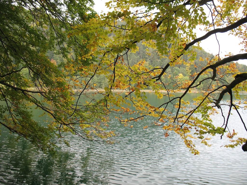 Buntes Herbstlaub am Alatsee