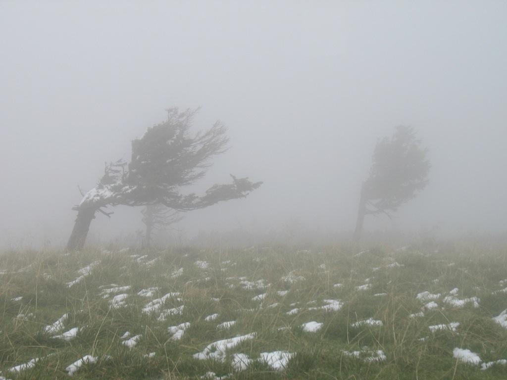 vom starken Wind verbogene Bäume in dichtem Nebel am Brauneck