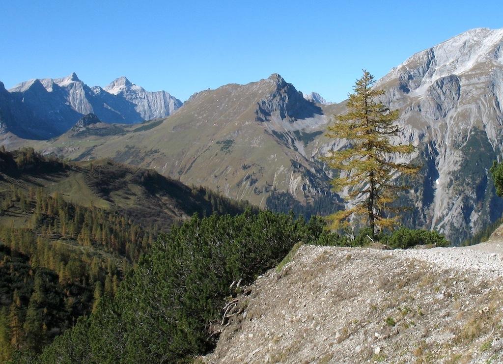 Im Herbst gelb gefärbte Lärche beim Aufstieg zur Lamsenjochhütte