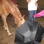 Pico untersucht einen Regenschirm näher