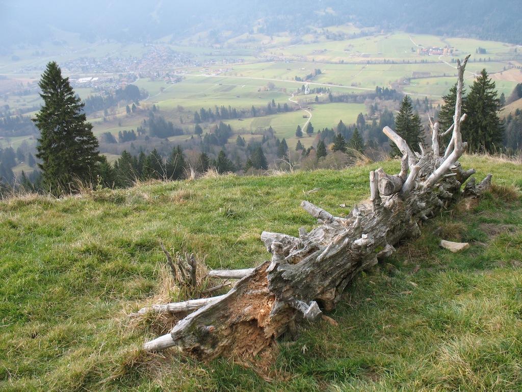 Toter Baum an den Drei Hörnle