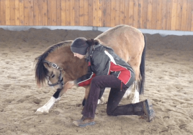 Pony Monty im Kompliment