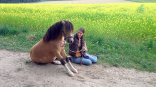 Pony Monty sitzt vor Ackersenf