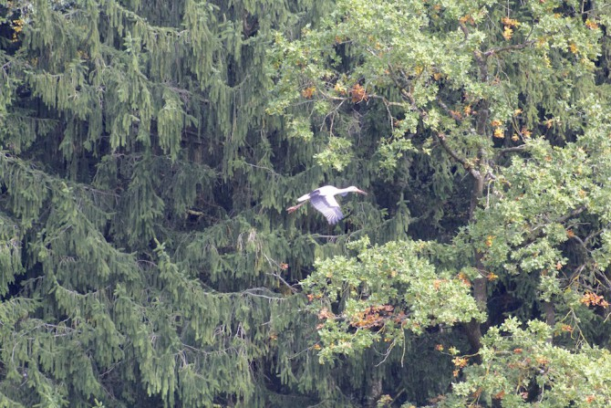 Storch, Poing