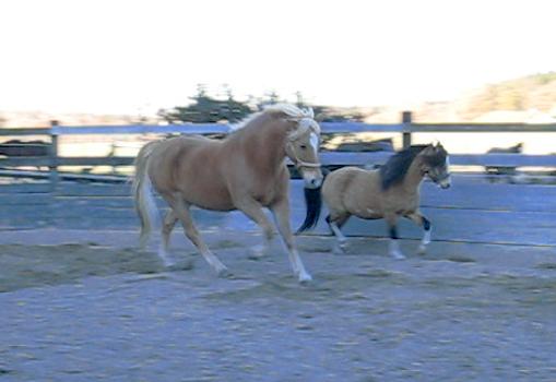 Pico und Monty im Roundpen