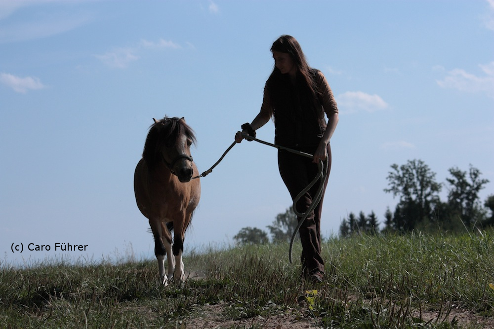 Spaziergang mit Welsh Pony Monty