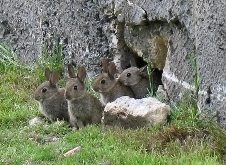 4 Kaninchenkinder in Reihe