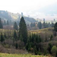 Weg auf die Hörnle, Blick übers Tal