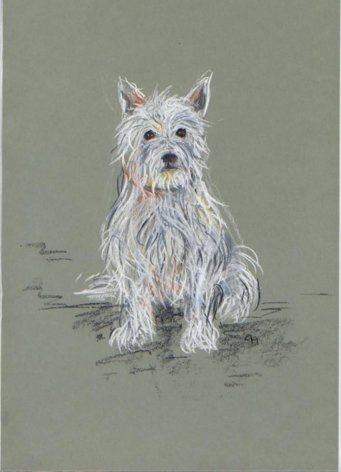 Zeichnung West Highland Terrier