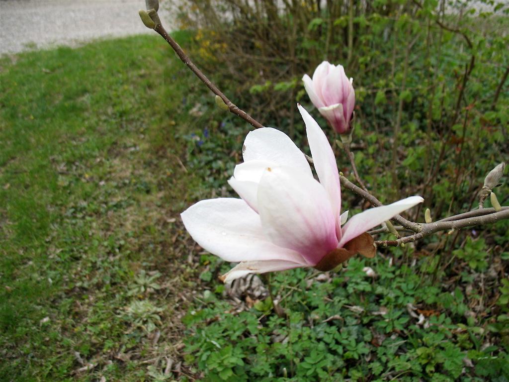 magnolie magnolia spec xenophora. Black Bedroom Furniture Sets. Home Design Ideas