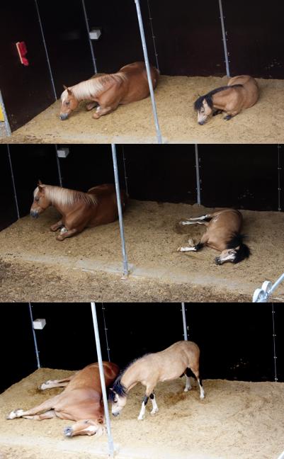 Ponys im Unterstand