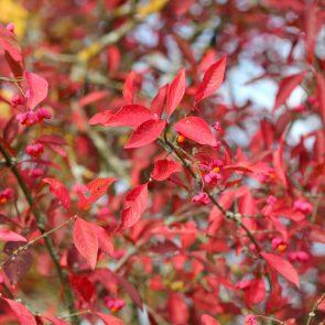Pfaffenhuetchen Herbst