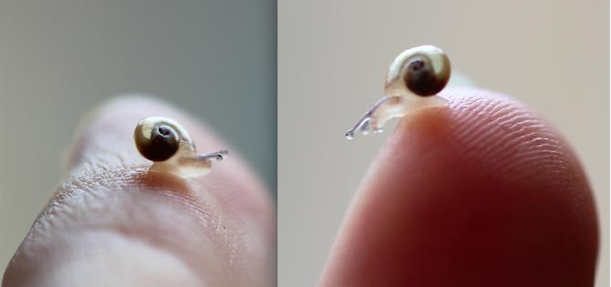 Mini-Schnecke auf Zeigefinger