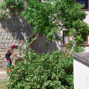 Holunderbaum Faellung