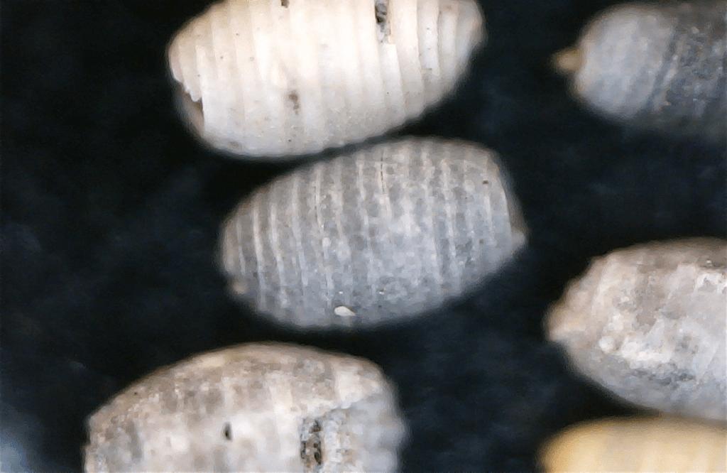 Ein mikroskop für weniger als euro xenophora
