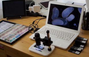 Das Mikroskop im Einsatz