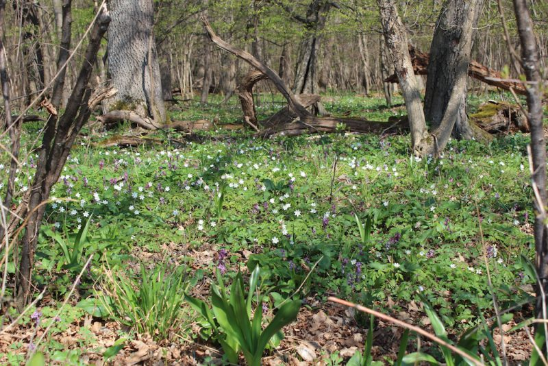 Naturwaldreservat Echinger Lohe