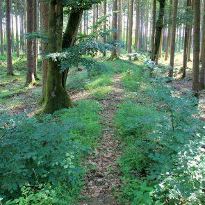 Keltenschanze im Laufzorner Holz