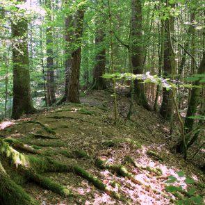 Keltenschanze nordöstlich von Kreuzpullach