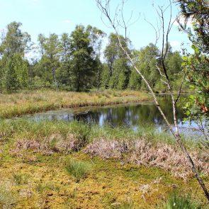 Haspelmoor Habitat