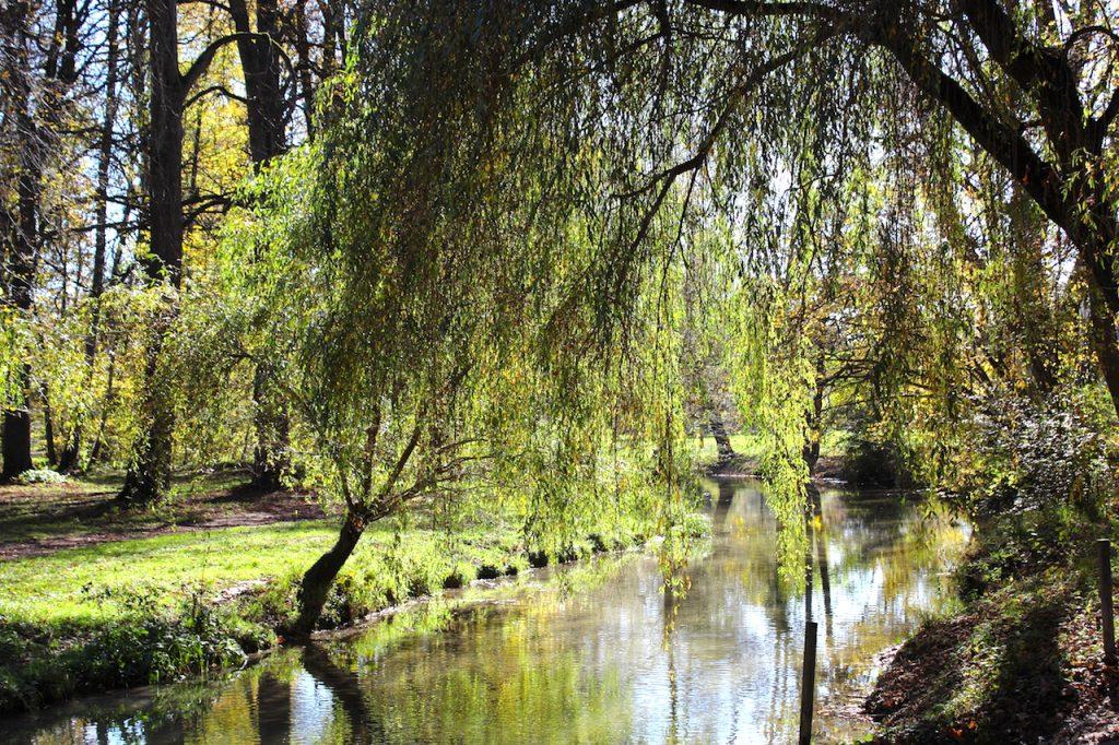 Englischer Garten Gegenlicht
