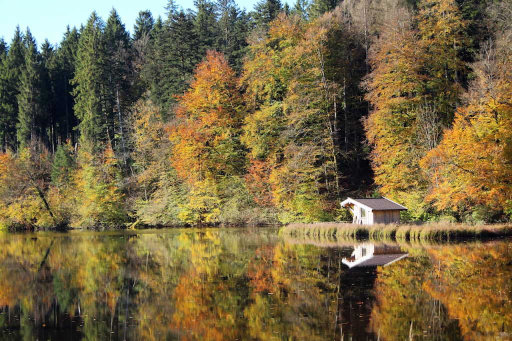 Kleiner Hackensee Herbststimmung