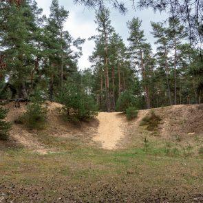 Binnendünen bei Offenstetten: freiliegender Sand