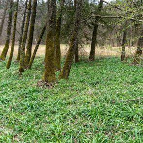 Sippenauer Moor