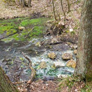 Sippenauer Moor: Schwefelquelle