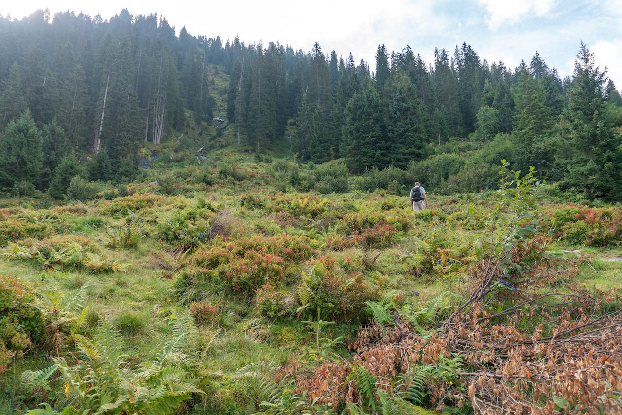 Dichter Bewuchs mit Farnen vor Wald